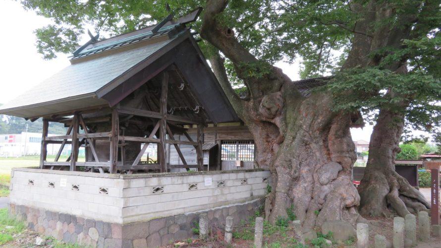 本殿と市指定記念物のケヤキ