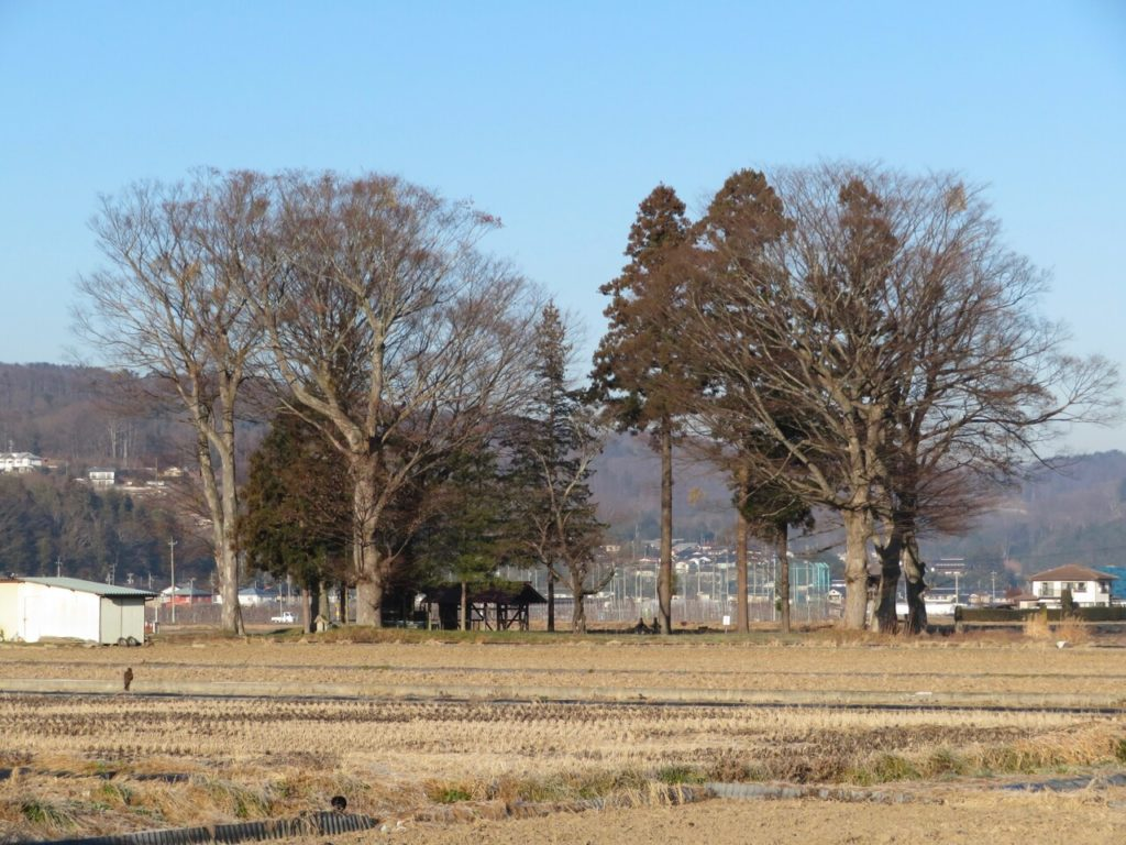 諏訪神社遠景