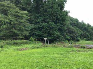 トトロが棲む森
