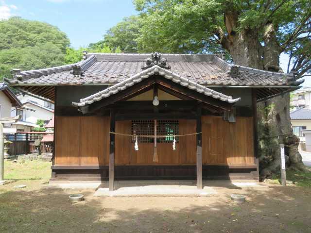 勝手神社拝殿とケヤキ