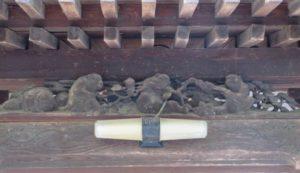 拝殿向拝 猿